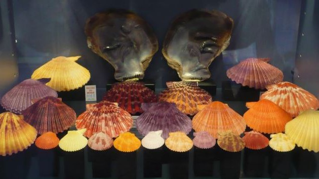 Nice - Musée des coquillages