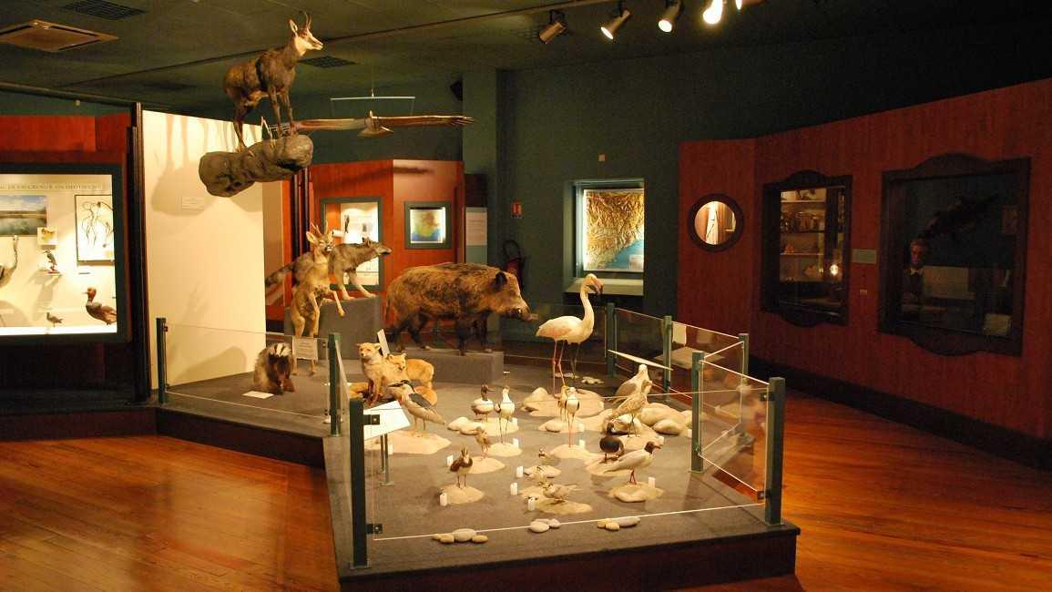 Nice - Muséum d'Hiistoire Naturelle
