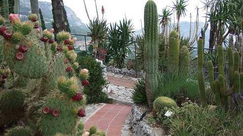 Jardin Exotique D Eze Decouvertes In Eze Nice City Life